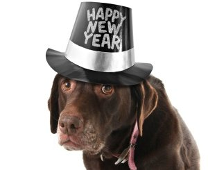 Happy New Year 2013 from Chaos Wildlife Control