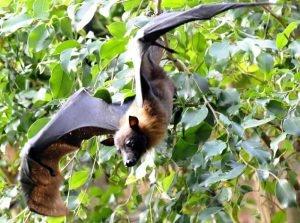 bat removal westchester ny