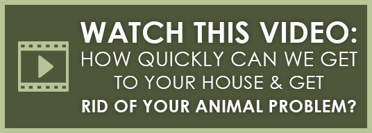 How Quickly Can We Get to Your Home and Get Rid of Your Animal?
